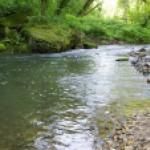 Získejte dotaci na drobné vodní toky nebo malé vodní nádrže