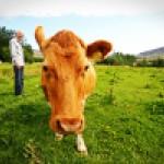 Poslední šance pro mladé zemědělce